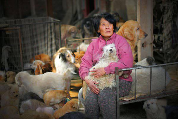 femme sauve chiens chine 1