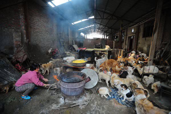 femme sauve chiens chine 2