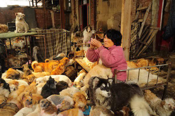 femme sauve chiens chine 3