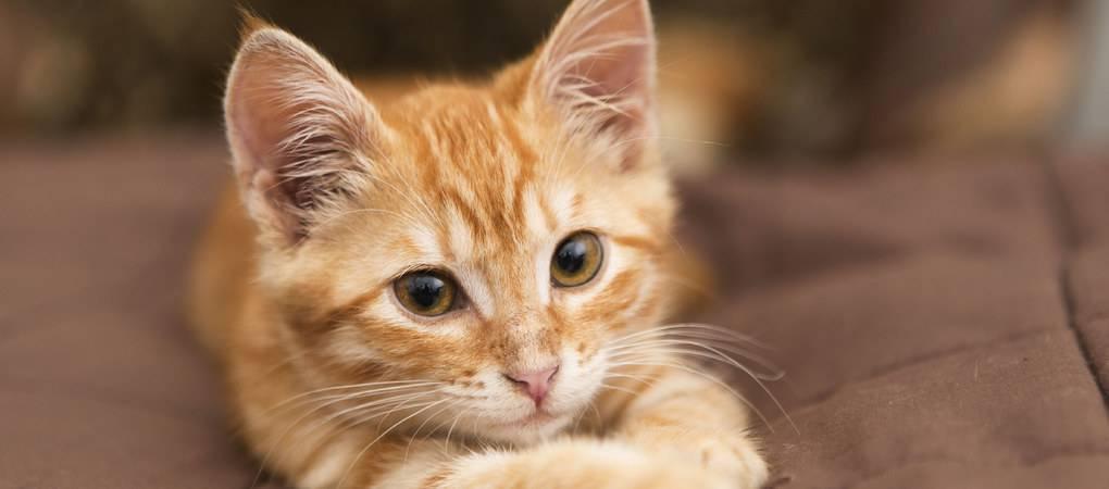 mission des chats