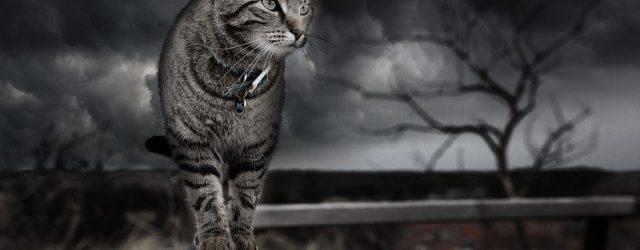 Pour le bouddhisme, les chats représentent la spiritualité. Le Chat était tenu en très grande considération chez les anciens. Il est l'emblème du courage, de l'indépendance mais aussi et surtout de la liberté. Symbole de la vigilance, il représente souvent des citoyens qui ont bien gardé une ville ou une commune.