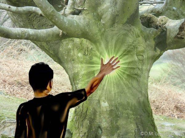 énergie-des-arbres