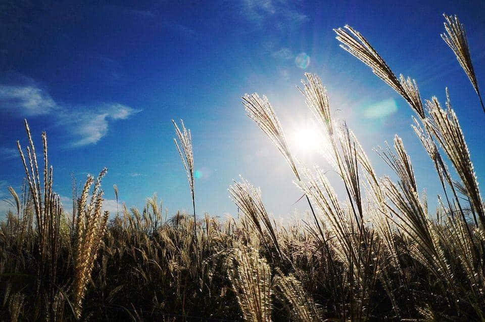 Reed, Ciel, Lumière, Automne