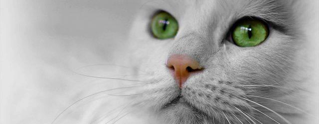 Voici que la pensée de ce chat très agréable, avec lequel j'entretiens une relation psychique depuis quelque temps résonne. Je m'empresse de noter ce qu'il me dit, et je suis instantanément stupéfaite par la profondeur de ses idées