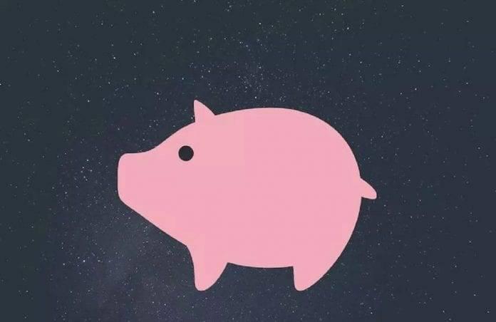 cochon de terre 2019
